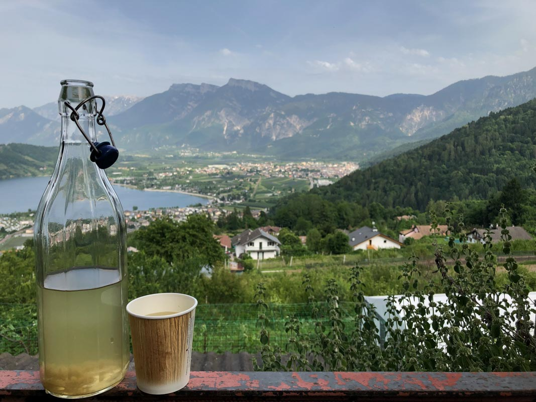 Drinking in Trentino - Dandelion Syrup