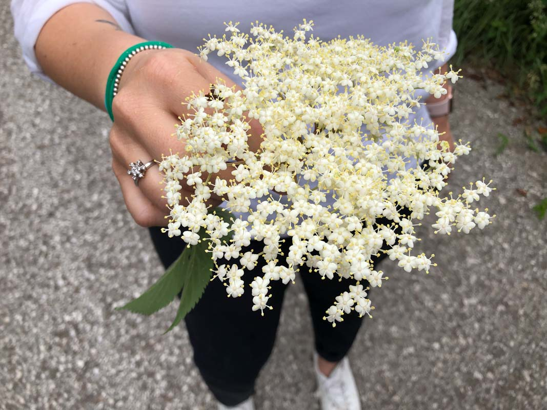 Drinking in Trentino - Elderflower