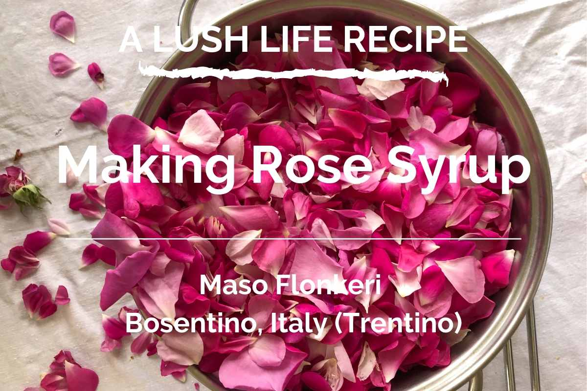 Making Rose Syrup for your cocktails